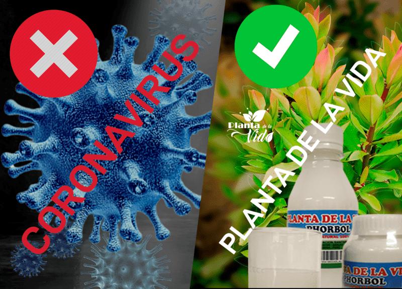 planta de la vida vs coronavirus
